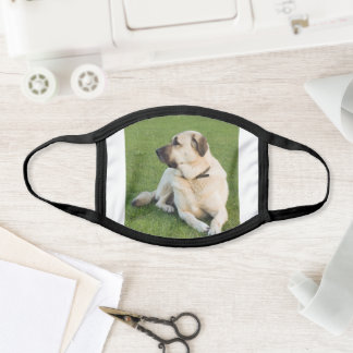 anatolian shepherd laying face mask