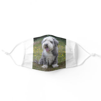 bearded collie sitting adult cloth face mask