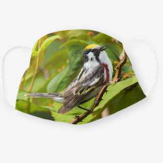 Beautiful Chestnut-Sided Warbler on a Branch Cloth Face Mask